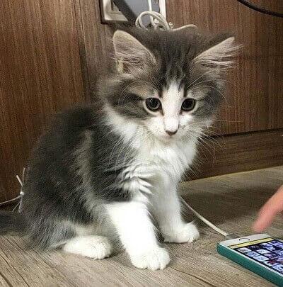 EXOシウミンのペットの猫画像